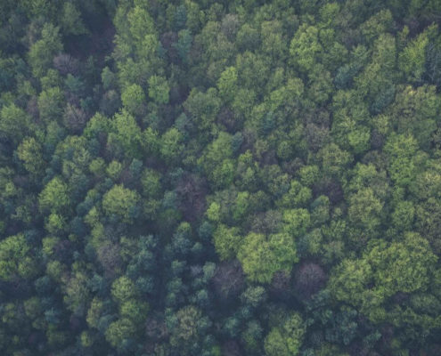 Aerial photo of the forest filled with green trees captured from above.